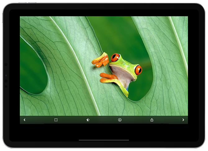 10 places to get awesome iPad Pro wallpapers